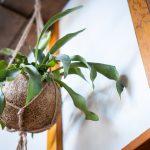 kokodama decoratie knus