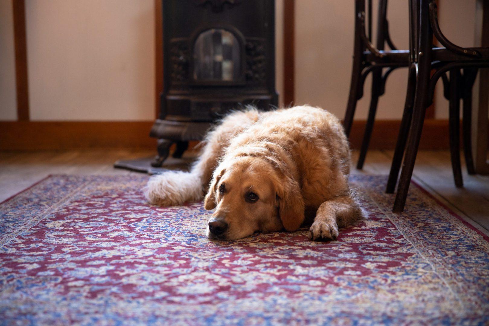 Hondvriendelijk delft